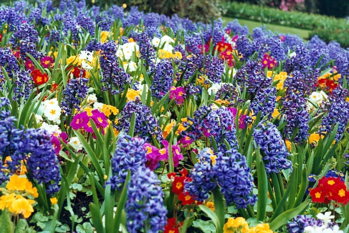 84765648_large_spring_flower_bed