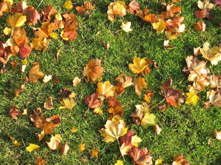 opalo-jesenje-lisce-na-zelenoj-travi_748x561